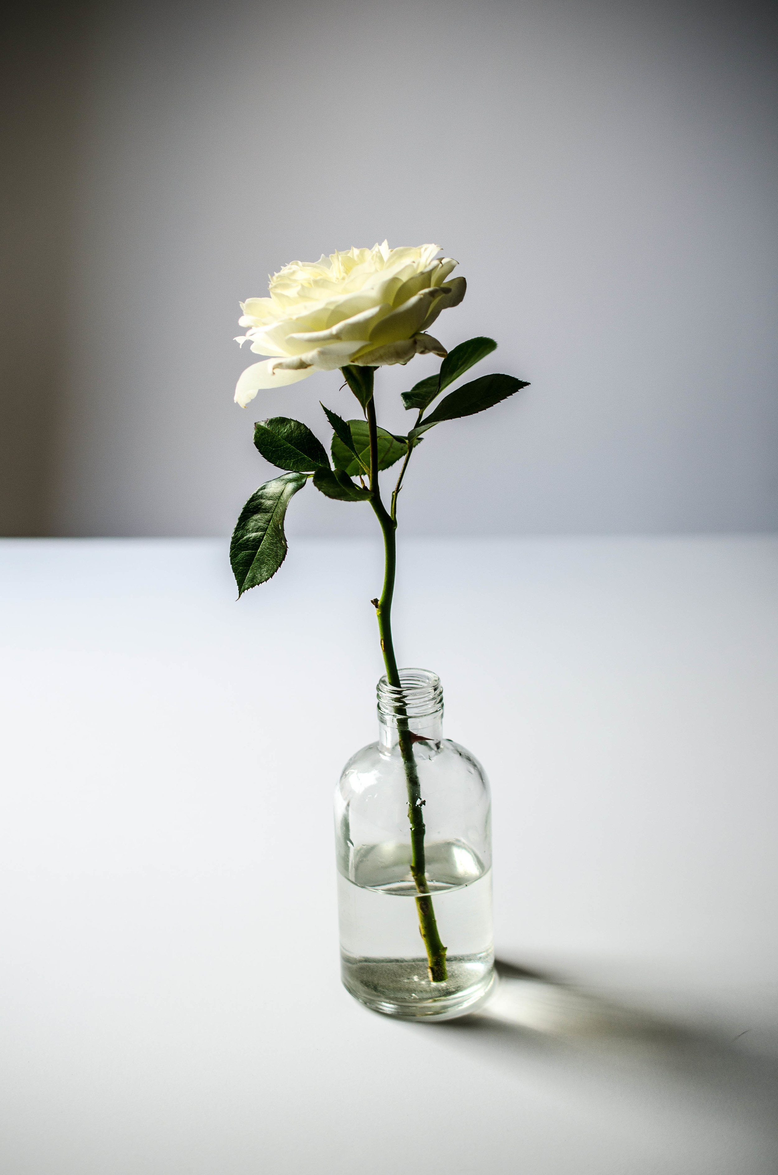 Single White Rose Vase