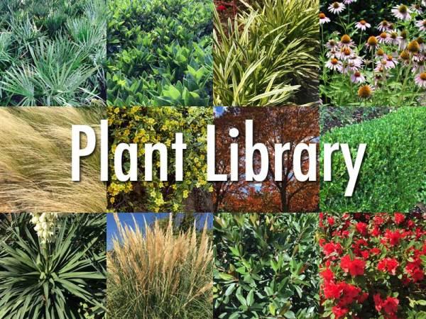 plants dallas - source