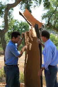 cork harvest oak 17.jpg