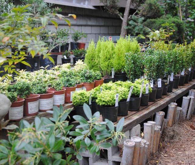 Bonsai Nursery In San Diego Jpg
