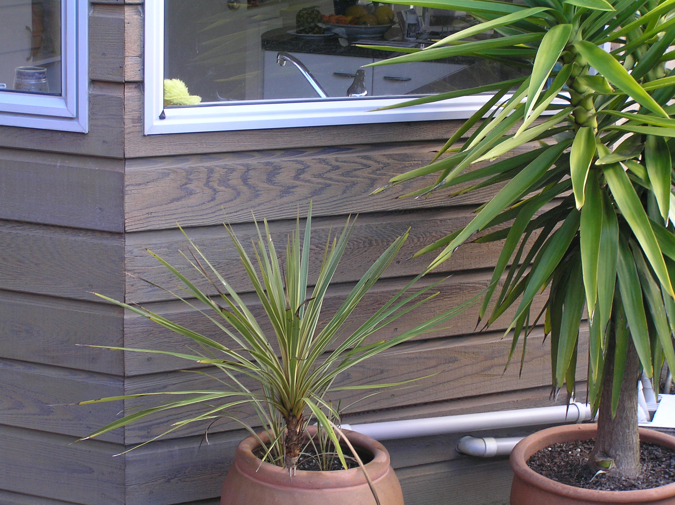 Best Oil For Cedar Weatherboards