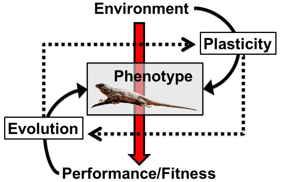 Research — TREE Lab: Telemeco Reptile Evolution & Ecology