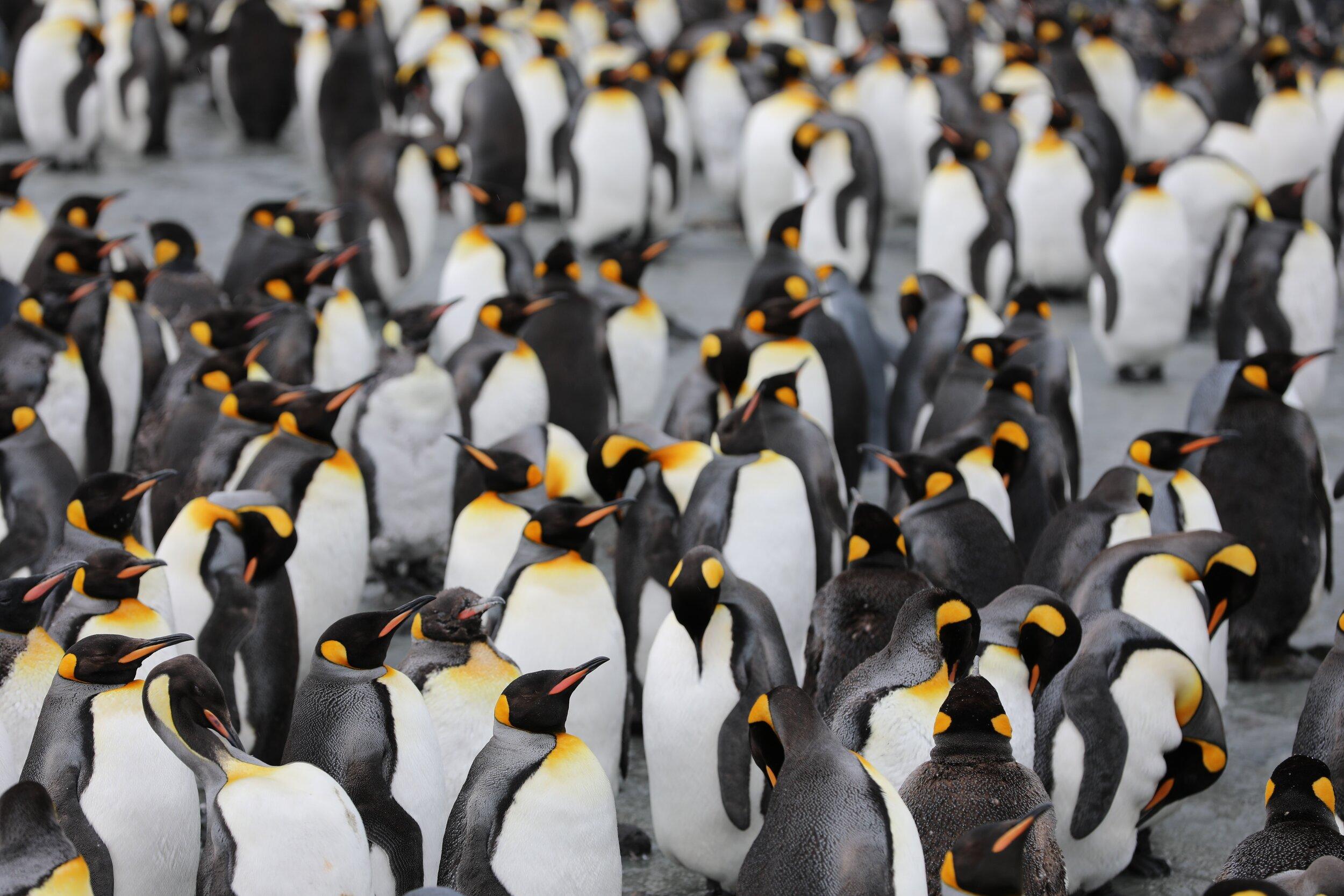 Free Penguin Awareness Day Math Activities for Grades K-8 — Mashup Math [ 1000 x 1500 Pixel ]