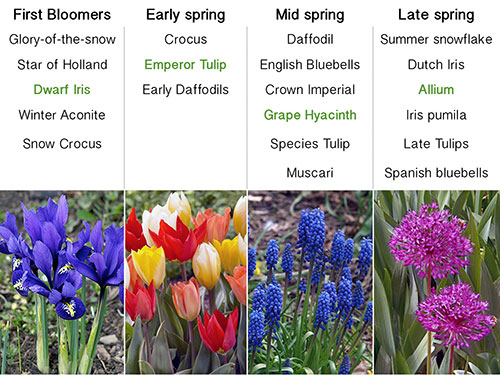 Garden Bulbs All Summer Blooming Bulb Collection Plan Your Bulb