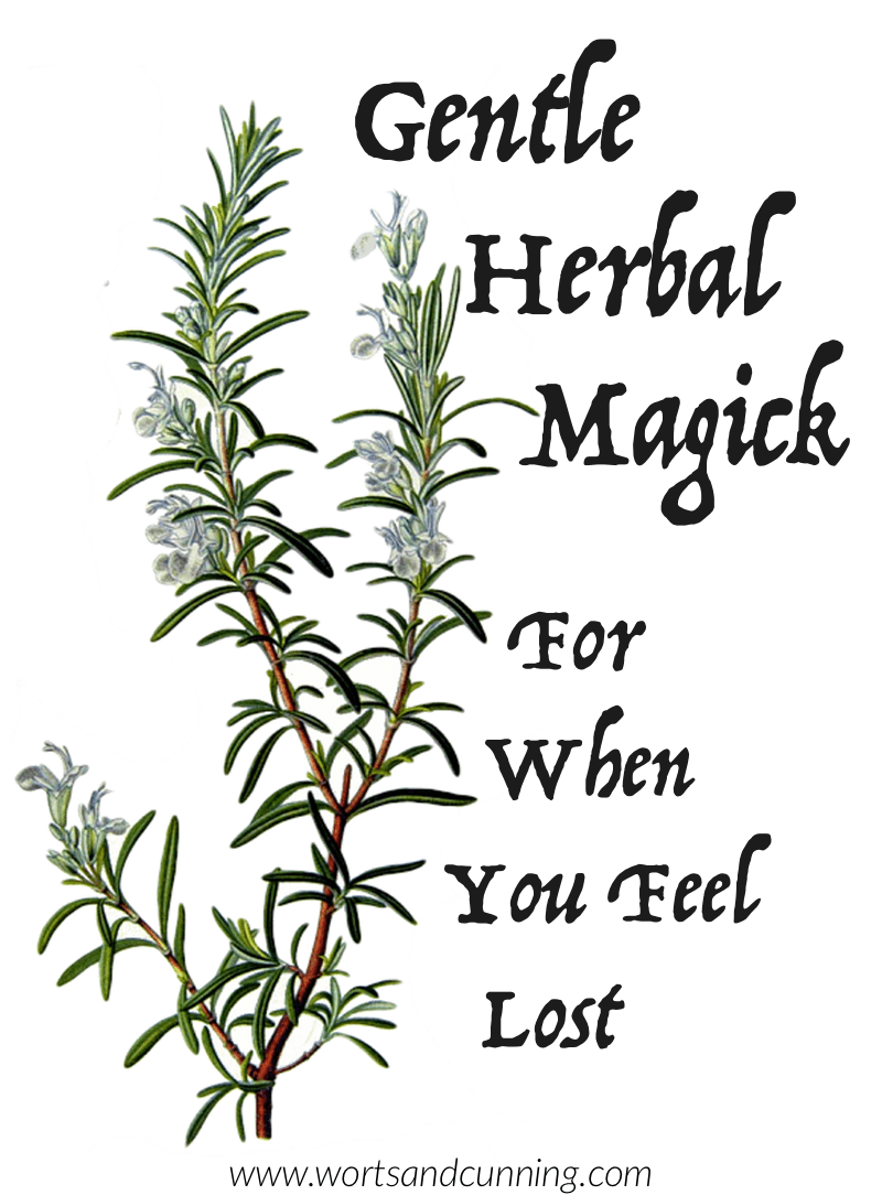 medium resolution of rosemary magickal uses herbal magick