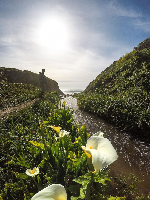 Calla Lily Valley  Garrapata Beach  Big Sur CA