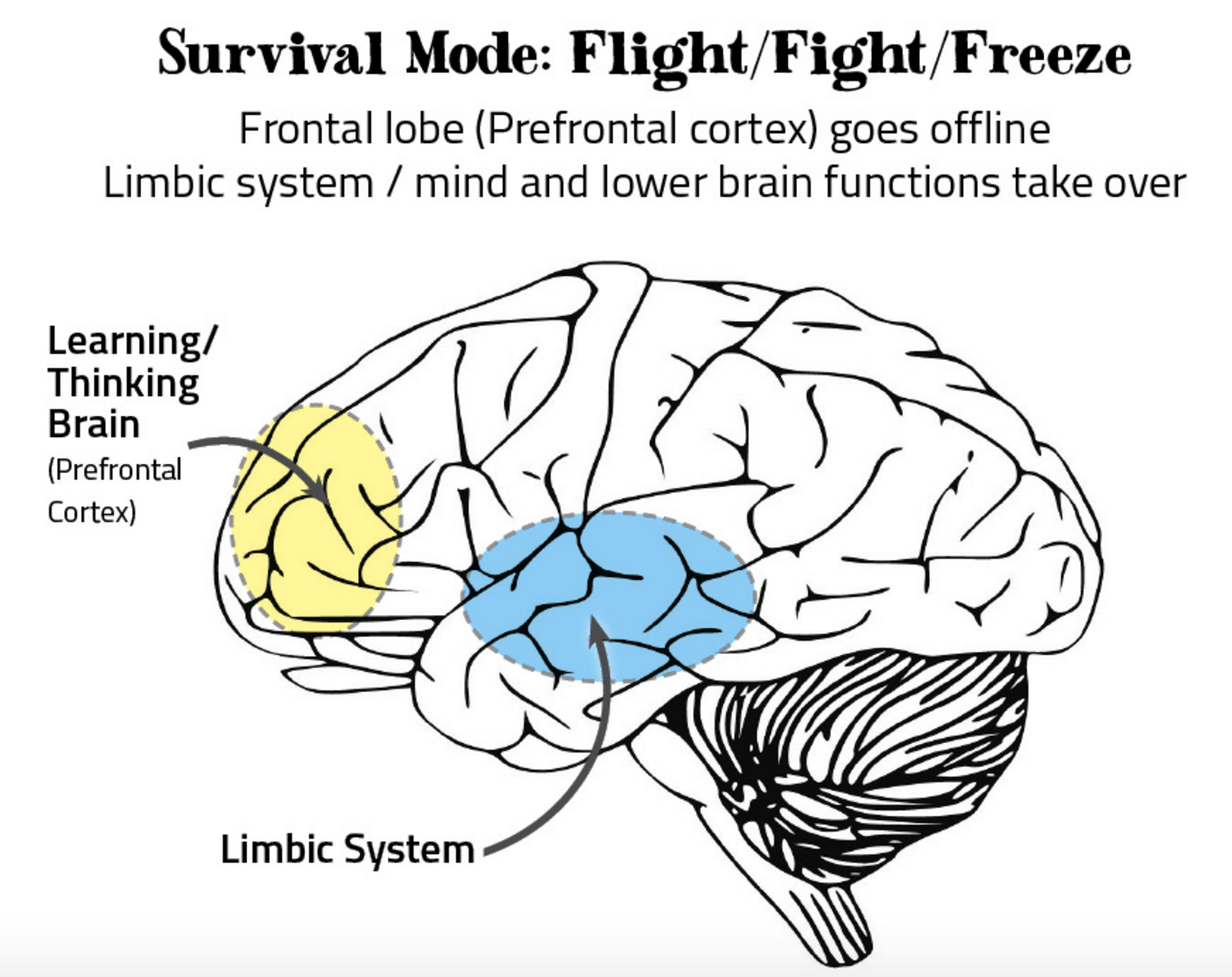 lower brain diagram 7th grade cell resilienceallononepage the speedy foundation screen shot 2016 06 12 at 4 03 53 pm png
