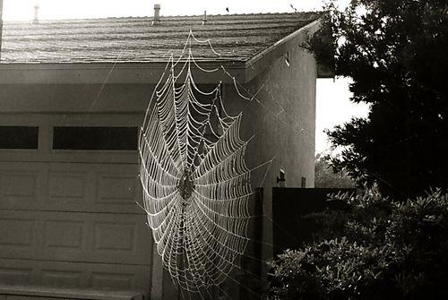 Spider web044