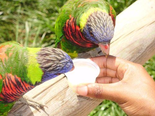 Amy bird 2