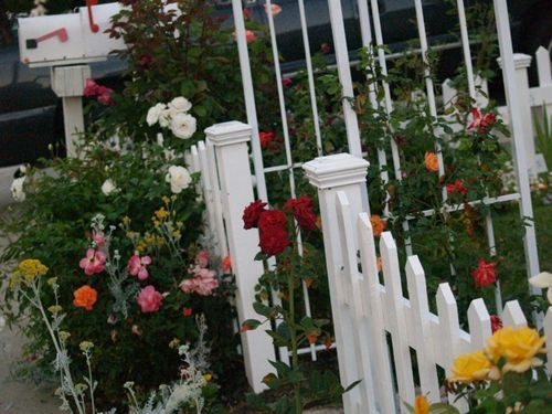 Flowers & fence