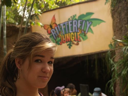 Butterfly jungle