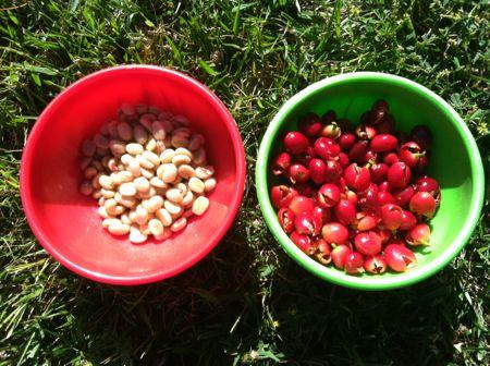 Peeling beans
