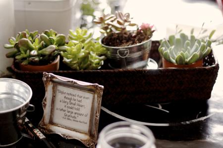 Succulent centerpiece 2