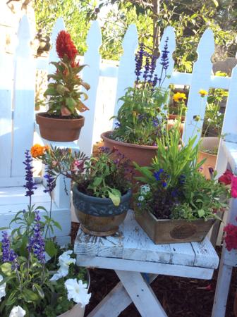 Garden-color