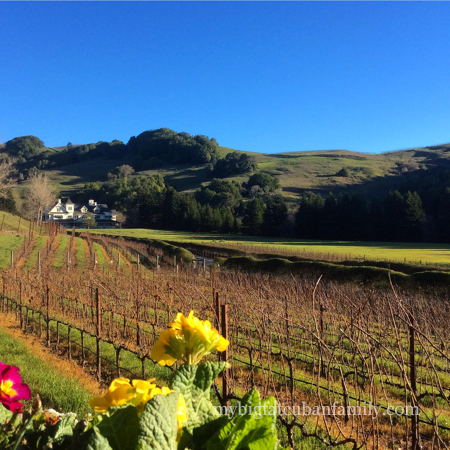 Skywalker-Ranch-vineyards-my-big-fat-cuban-family copy