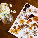 Pressed Flower Art For Your Home Retro Den Vintage Furniture And Homewares