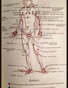 The marmas vital junction points  ed kishtur yoga also rh edkishtur