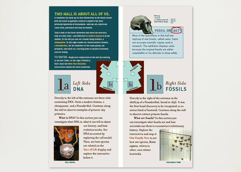 Museum Brochure American Museum Of Natural History — In Grid Design