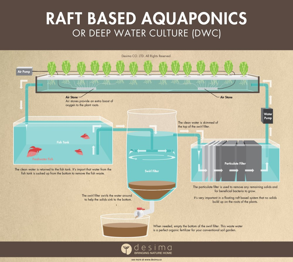 medium resolution of raft based aquaponics or otherwise known as deep water culture dwc infographic