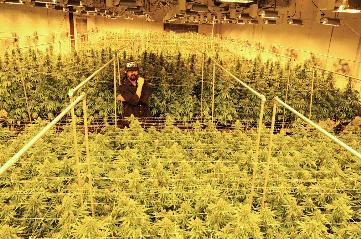 Damian Marley in a cannabis grow space in Denver, Colorado run in partnership with TruCannabis on Sept. 22, 2016. Photography by Mark Stung.