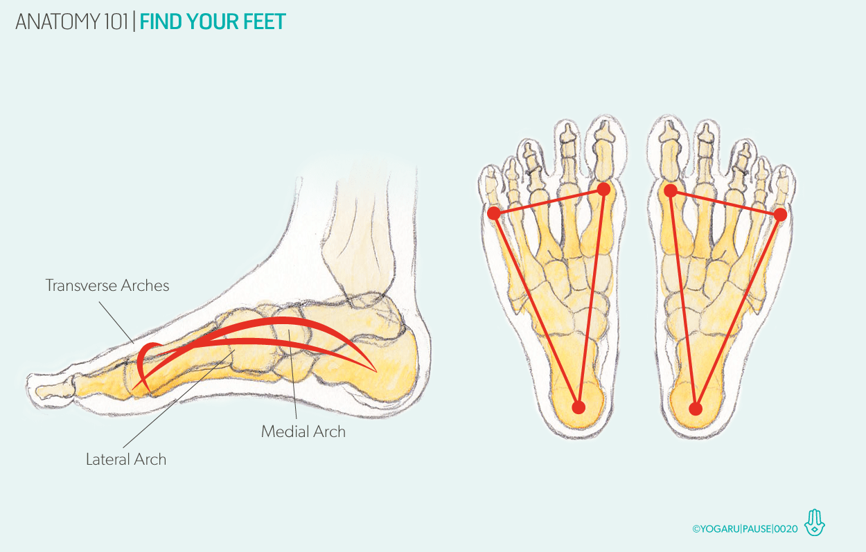 small resolution of diagram of heel structure