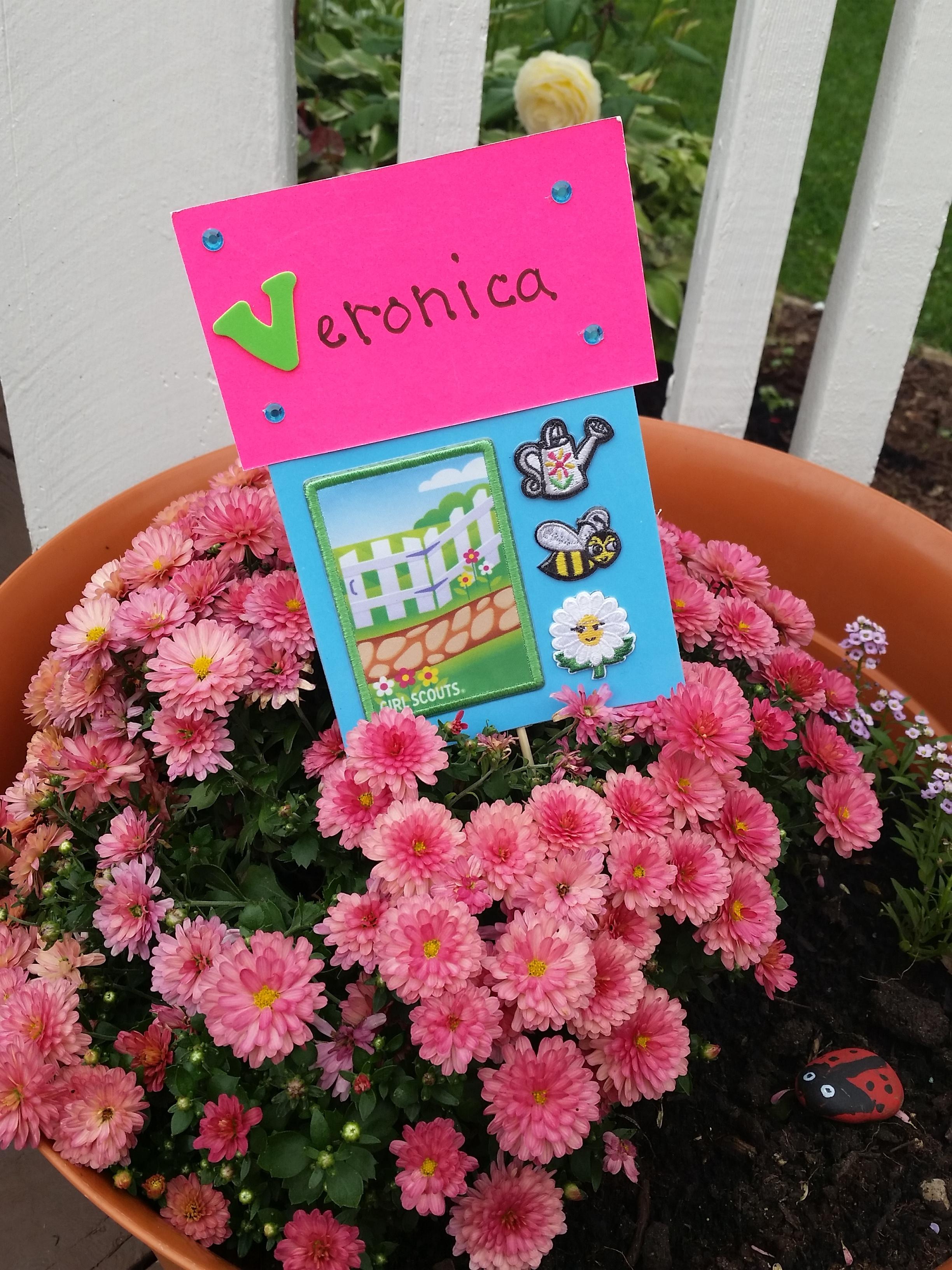 Daisy flower garden journey patches izmirmasajfo