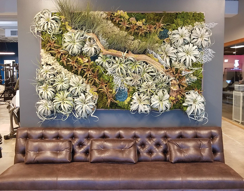 wall pictures living room color ideas for with brown couch walls vertical gardens plant moss at spero rehab austin tx