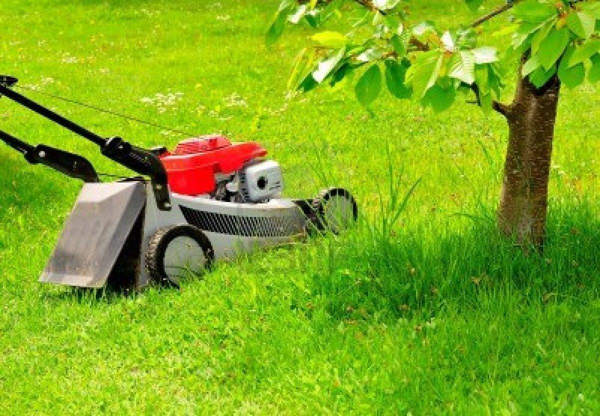 How Clean Leaves Mulch