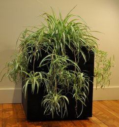 indoor planter box ipe planter box for sale new york city planter boxes for [ 1000 x 854 Pixel ]