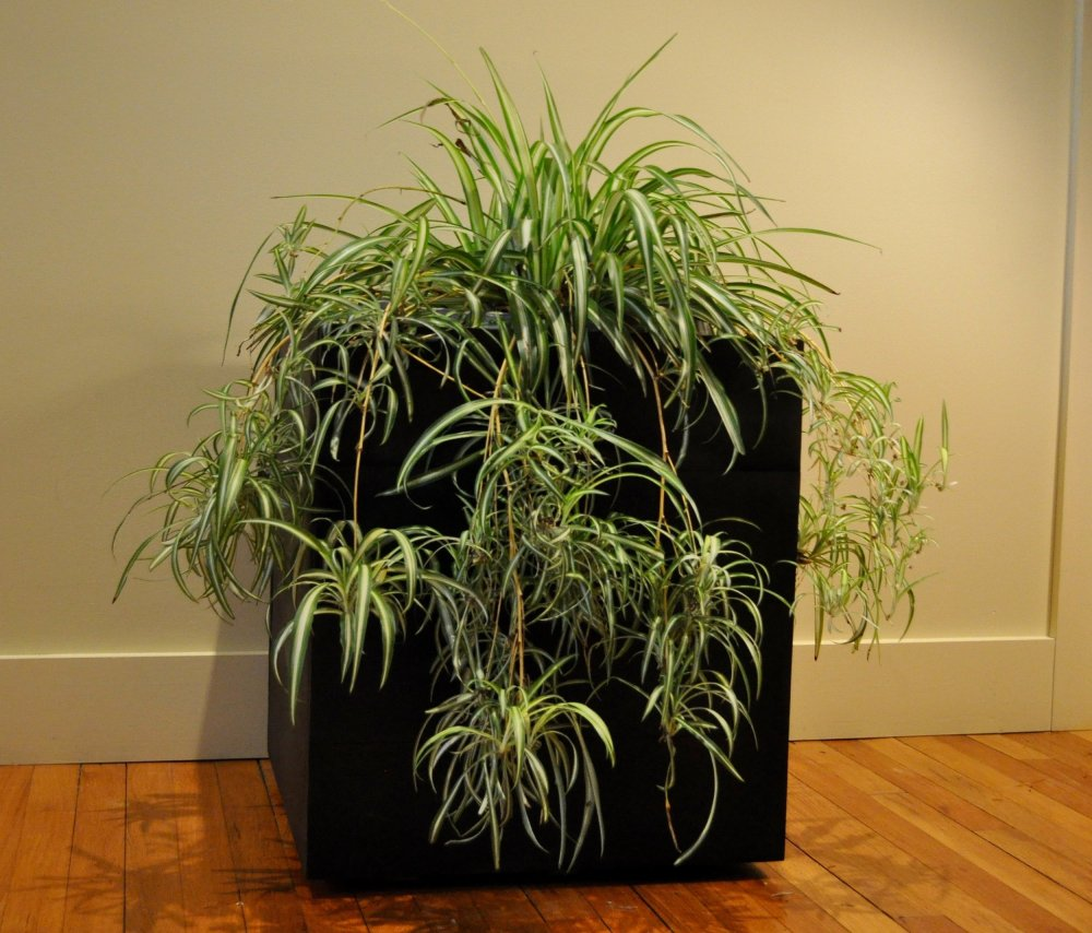medium resolution of indoor planter box ipe planter box for sale new york city planter boxes for