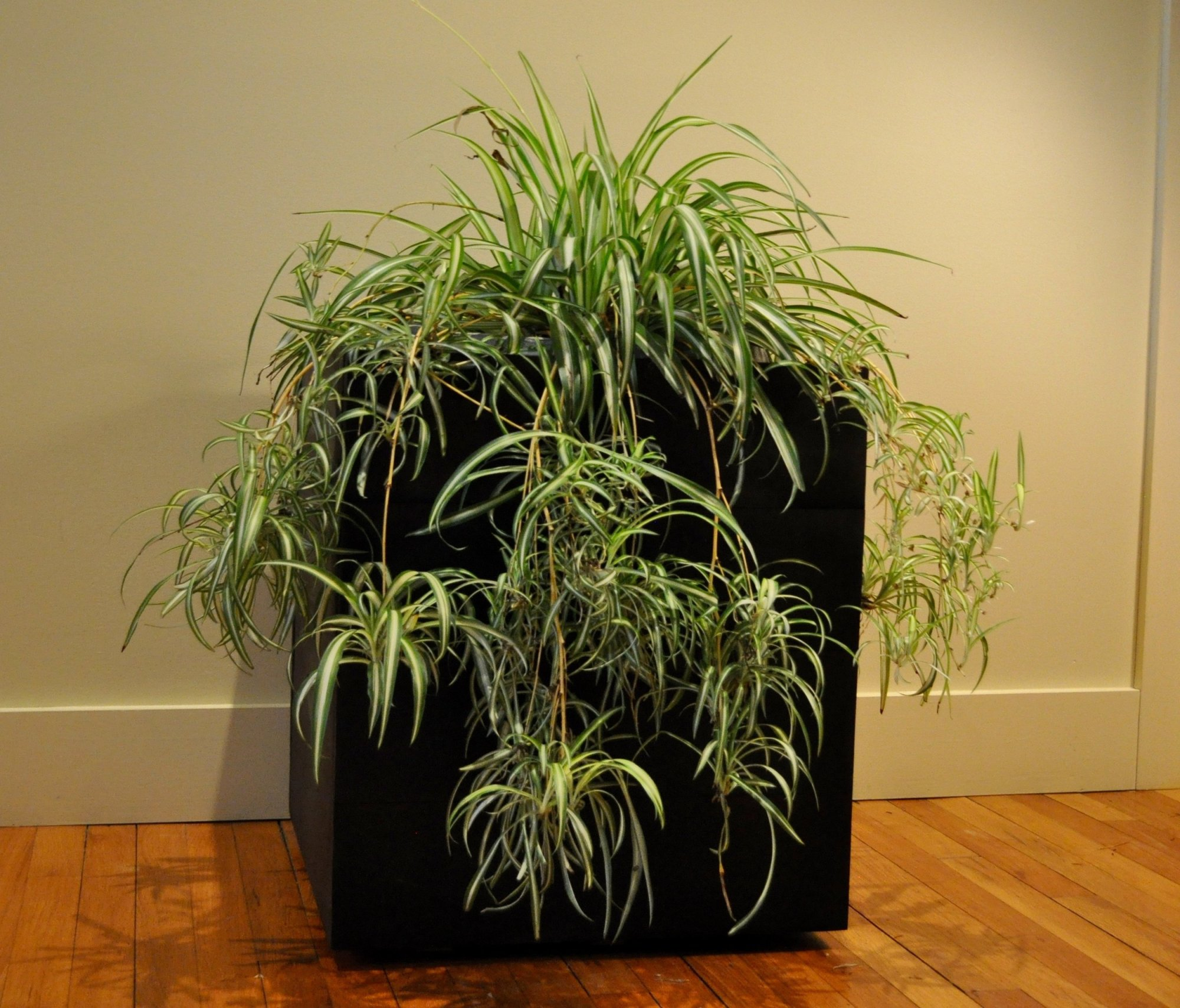 hight resolution of indoor planter box ipe planter box for sale new york city planter boxes for