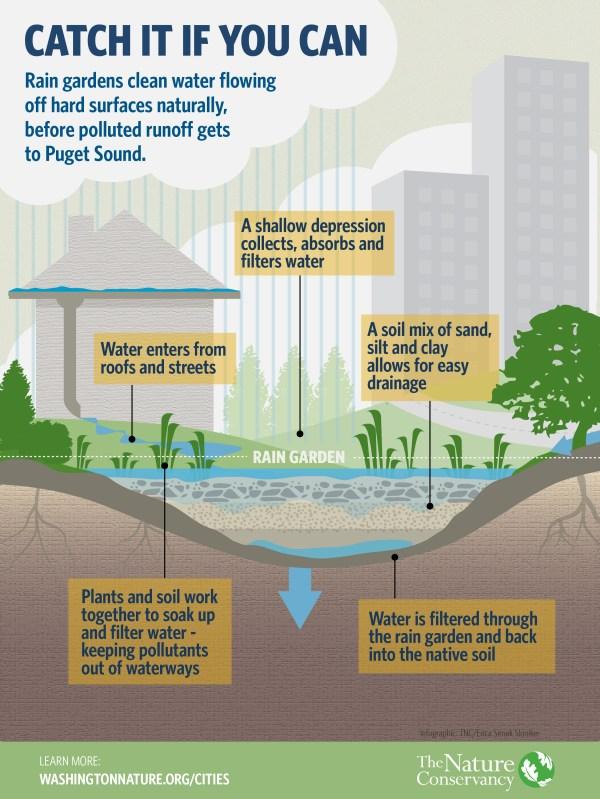 Rain Gardens Surface Nature Conservancy