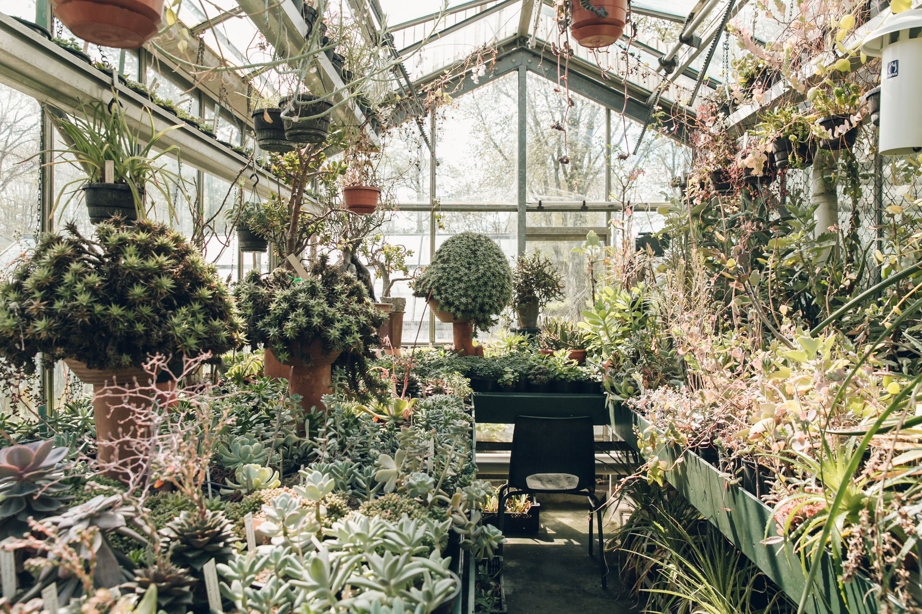 Inside The Glasshouses At Botanische Tuin Zuidas In Amsterdam