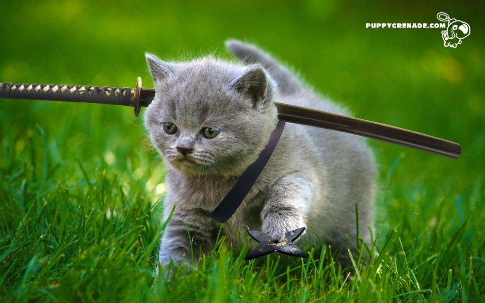 Katana Kittens — Puppy Grenade
