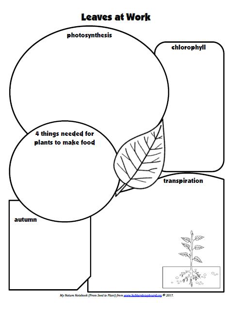 Science — Hubbard's Cupboard