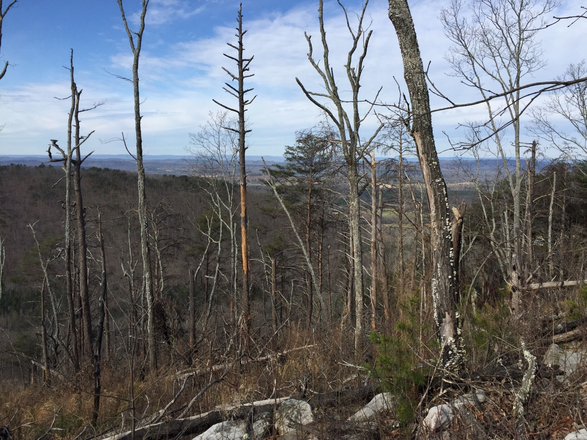 Blasted trees near Mill Creek Mountain.