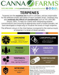 Canna farms performs terpene testing on select strains of cannabis terpenes are the essential oils found in and responsible for different also dried  ltd acmpr licensed producer craft rh cannafarms
