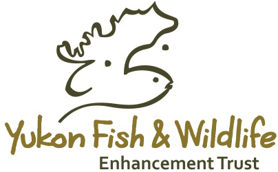 Image result for yukon wildlife trust