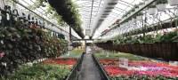 Greenhouse List 2017  Kings Furniture