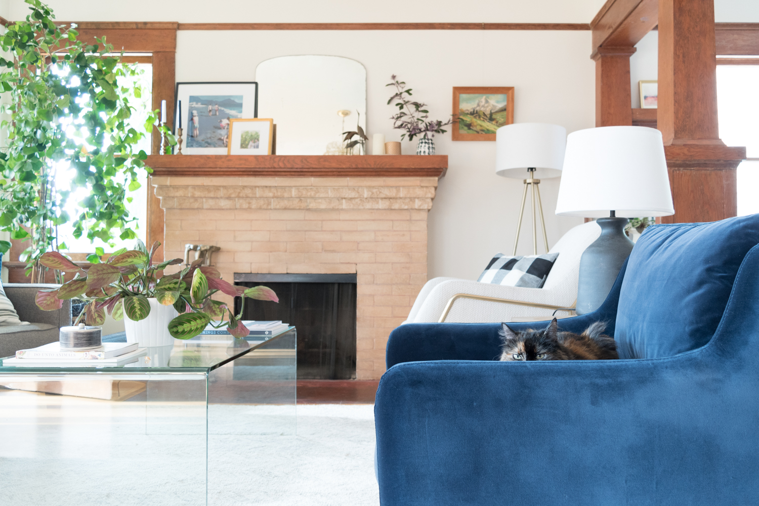 blue velvet living room chairs modern wall mirrors for finally deciding on the gold hive chair
