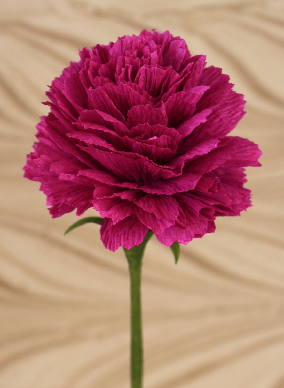 Pics Of Carnations : carnations, Crepe, Paper, Carnation, Flower, PAPERCRAFT, MIRACLES