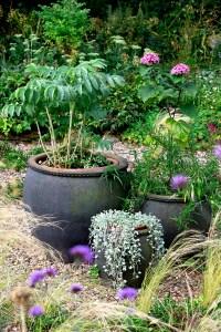 The gravel garden  Garden Answers