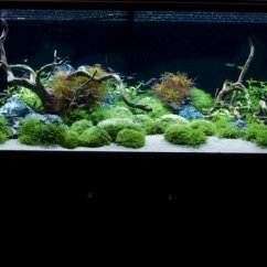 Decorate Small Living Room Ikea Modern Inspirational Aquariums: Contemporary Planted Tank ...