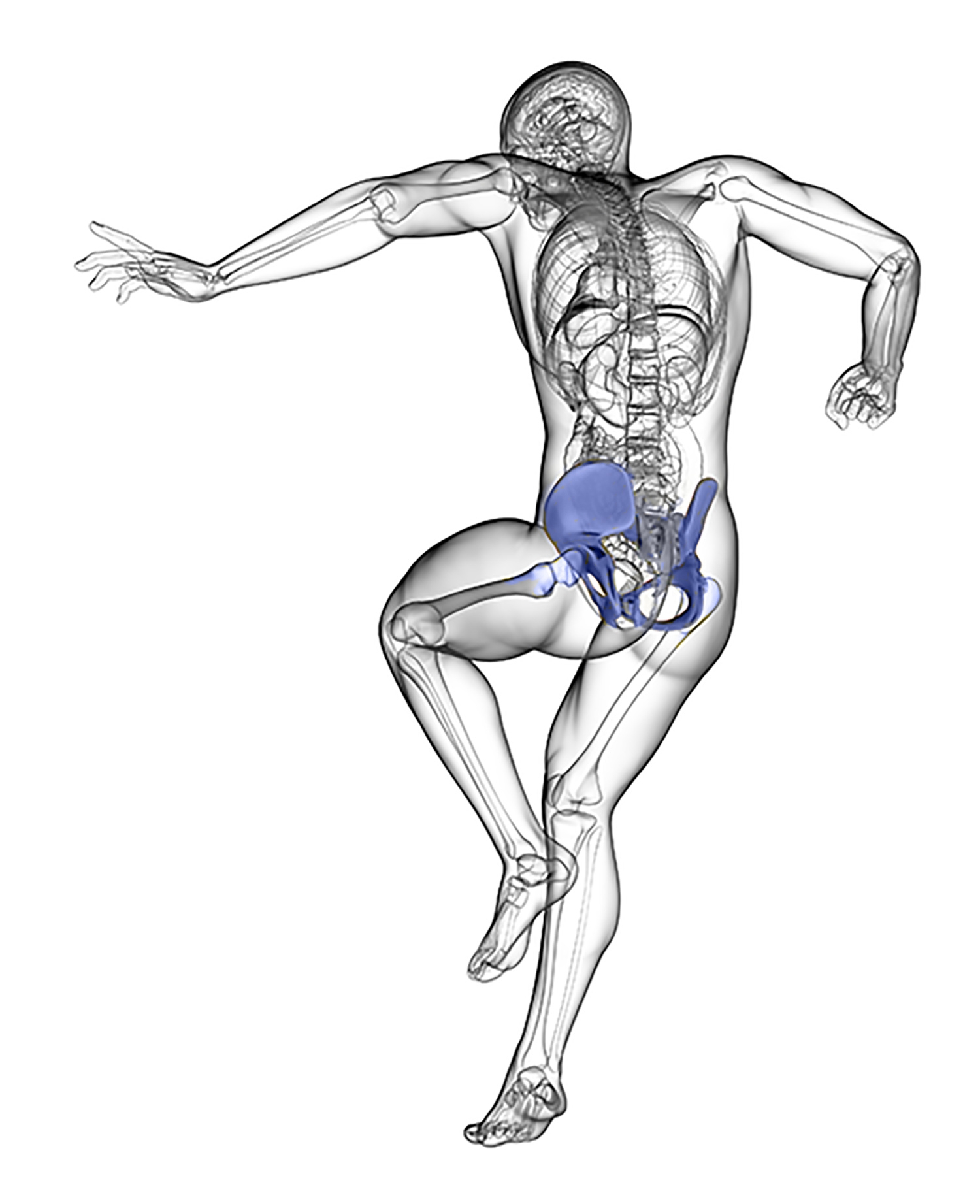 medium resolution of the hip joint