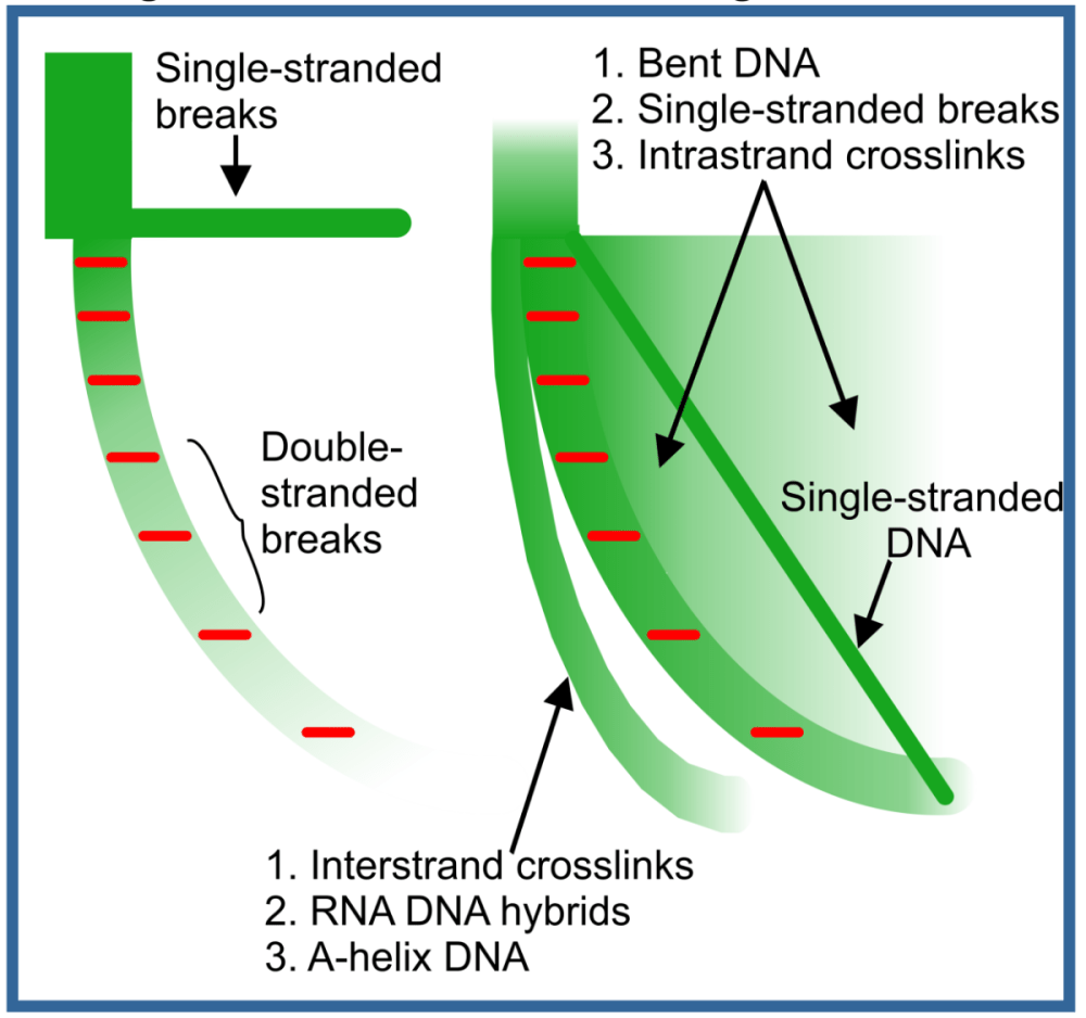 medium resolution of this allows for the quantitation of the various sub fractions of nucleic acids dsdna ssdna dna rna hybrids inter and intra strand crosslinks dna