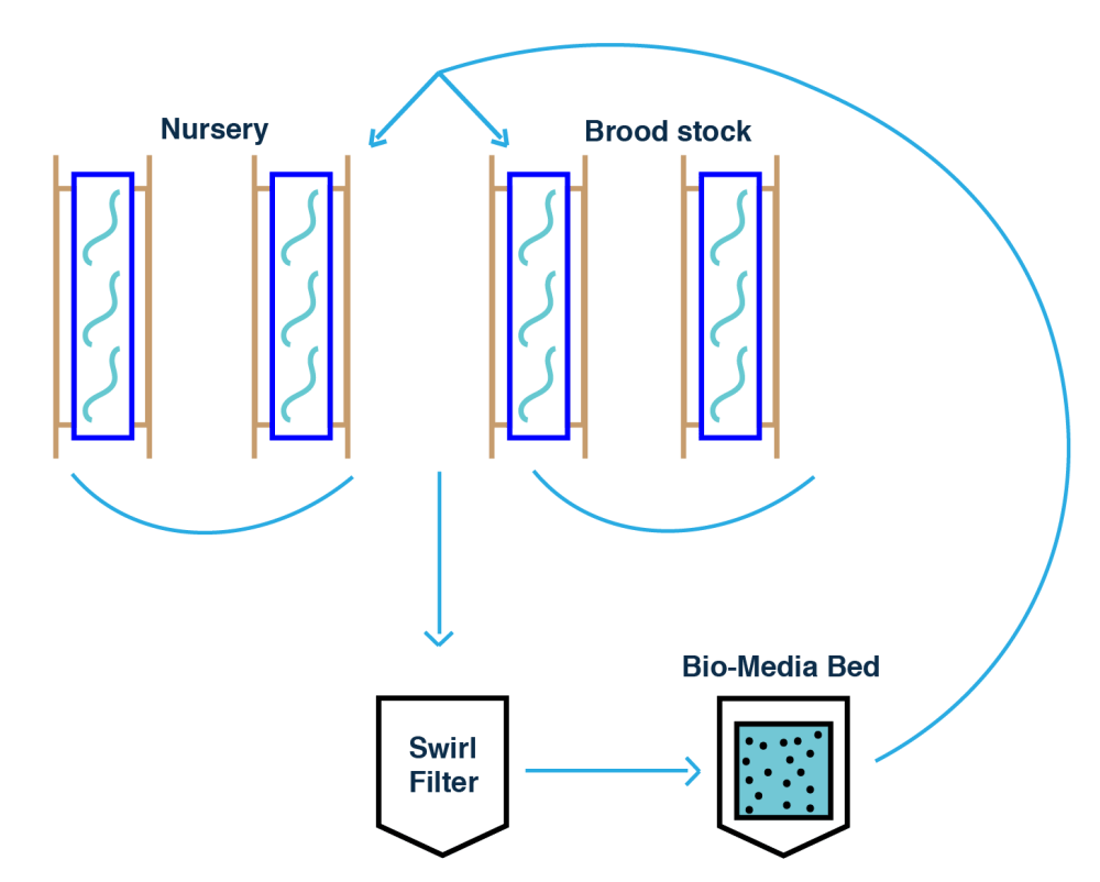 medium resolution of the new design will separate the brood stock and nursery from the main aquaponics system the design incorporates another bio media bed which is an