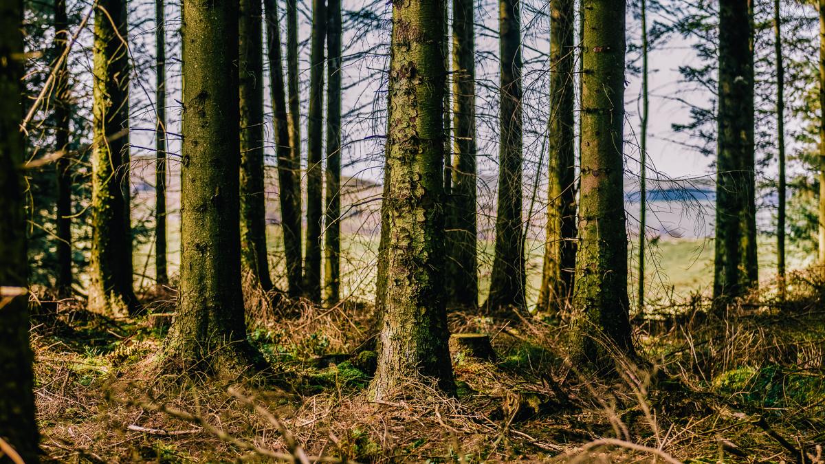34c49-nercwysforestnercwysforest.jpg