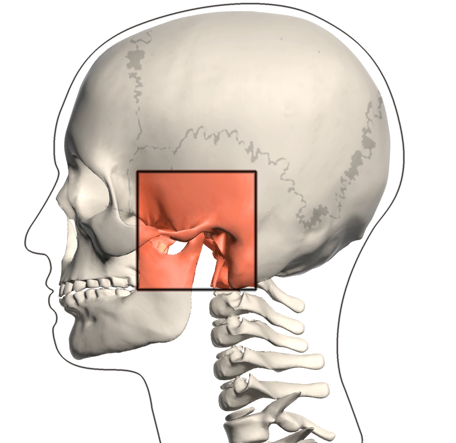 tmj stands for the temporomandibular joint temporal like the temple bone of your skull and mandible meaning your jaw bone  [ 1000 x 973 Pixel ]