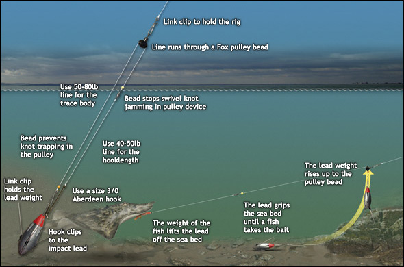 ray and skate diagram block of wireless power transmission top tips for catching rays from the beach sea angler jpg