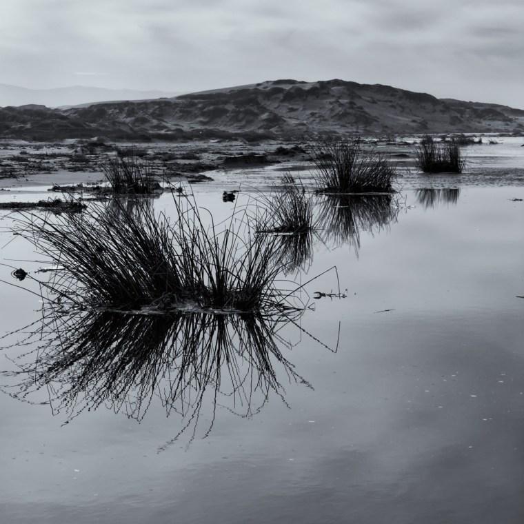 High Tide Reeds - Guadalupe, CA